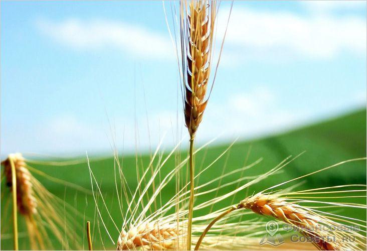 Плательщики сельскохозяйственного налога не платят налог на прибыль