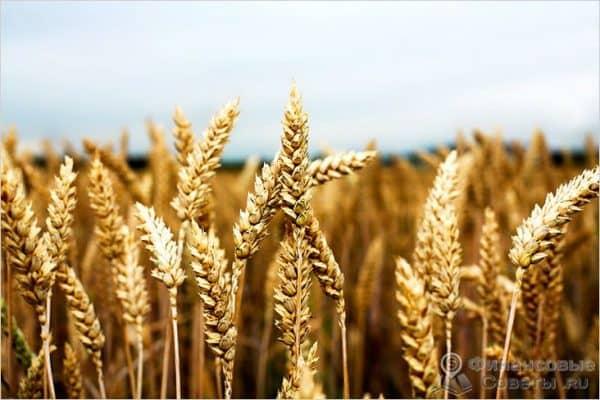 Виды сельскохозяйственного страхования